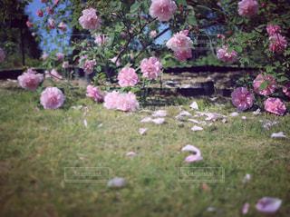風景の写真・画像素材[594189]