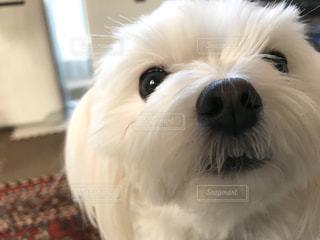 犬の写真・画像素材[595624]