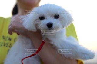 犬の写真・画像素材[595717]