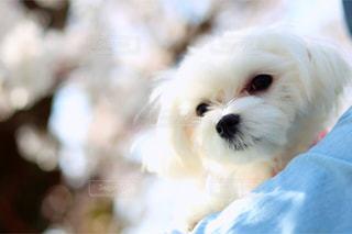 犬の写真・画像素材[595777]