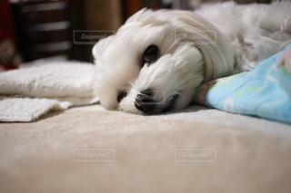 犬の写真・画像素材[596122]