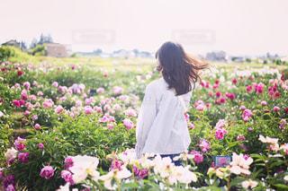 女の子と芍薬畑の写真・画像素材[596123]