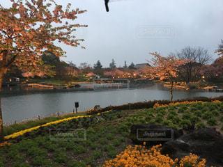 花の写真・画像素材[594336]