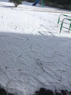 雪の写真・画像素材[979100]