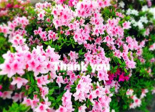 植物の上のピンクの花の写真・画像素材[4535400]