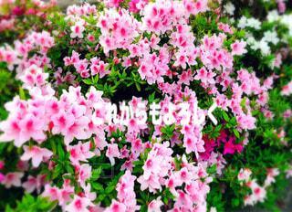 植物の上のピンクの花の写真・画像素材[4535441]