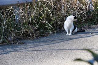 猫の写真・画像素材[594587]
