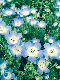 青い花の写真・画像素材[598996]