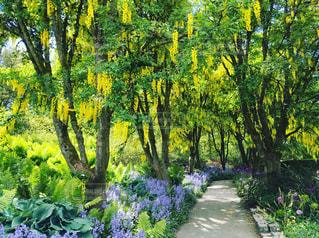 カナダの植物園の写真・画像素材[594786]