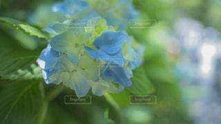 近くの花のアップの写真・画像素材[1206701]
