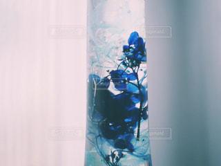 花標本の写真・画像素材[1513495]