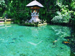 バリのモネの池の写真・画像素材[1983327]