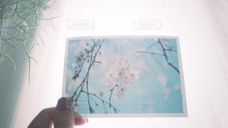 フィルム写真と私の写真・画像素材[2211961]