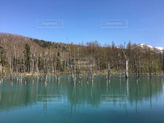 青い池 - No.595077