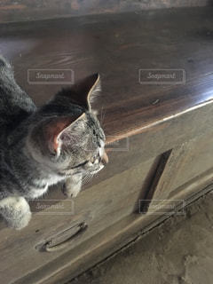 猫の写真・画像素材[677411]