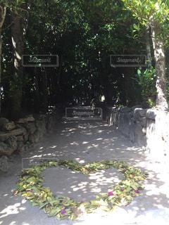 自然の写真・画像素材[595823]