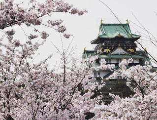 桜の写真・画像素材[595869]