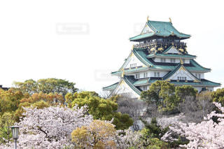 桜の写真・画像素材[595870]