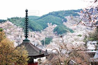 桜の写真・画像素材[595875]