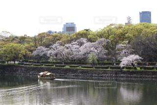 桜の写真・画像素材[595904]