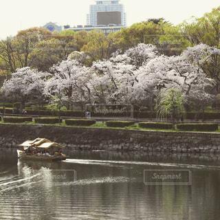 桜の写真・画像素材[595906]