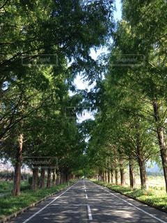並木の写真・画像素材[595959]