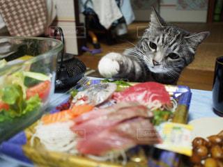 猫の写真・画像素材[600124]