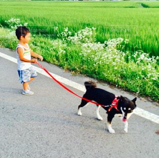 犬の写真・画像素材[602275]