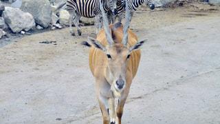 動物の写真・画像素材[641663]