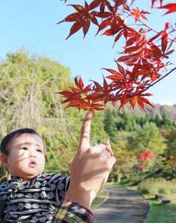 秋の写真・画像素材[641670]