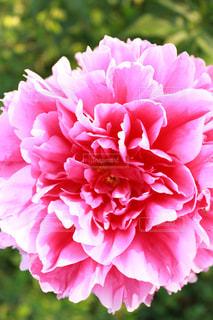花の写真・画像素材[641694]