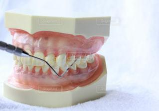 歯の写真・画像素材[641702]