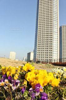 花の写真・画像素材[641711]