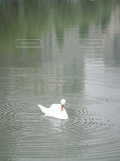 鳥 - No.641787
