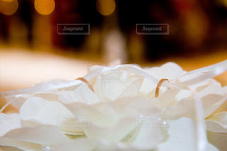 花の写真・画像素材[641816]