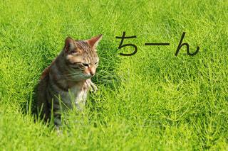 猫の写真・画像素材[646782]