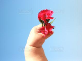 花の写真・画像素材[646974]