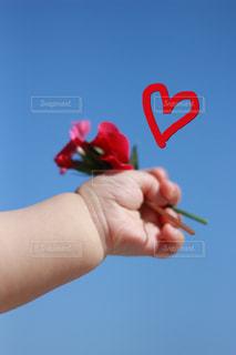 花の写真・画像素材[646975]