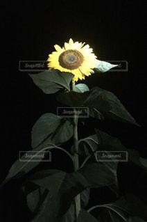 花の写真・画像素材[701265]