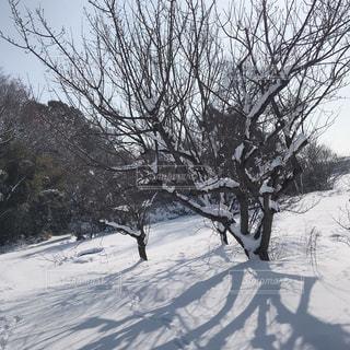 人々 のグループ クロスカントリー スキー雪の中での写真・画像素材[1016439]