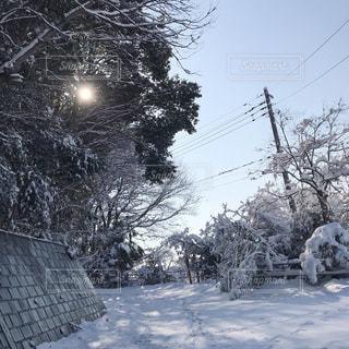 雪に覆われた木の写真・画像素材[1016447]