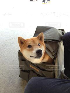 犬の写真・画像素材[599904]