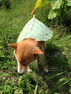 犬の写真・画像素材[599905]