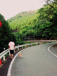 犬の写真・画像素材[599925]