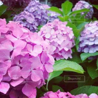近くの花のアップの写真・画像素材[1264763]