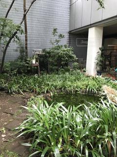 庭の植物の写真・画像素材[762848]