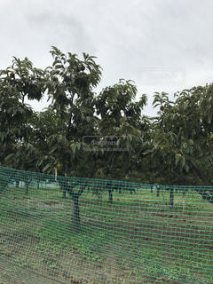 背景の木と大規模なグリーン フィールドの写真・画像素材[797273]