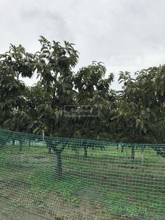 背景の木と大規模なグリーン フィールド - No.797311