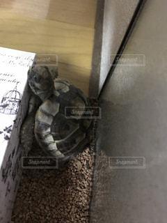 近くに爬虫類のアップの写真・画像素材[797324]