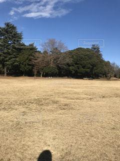 秋の公園の写真・画像素材[933331]